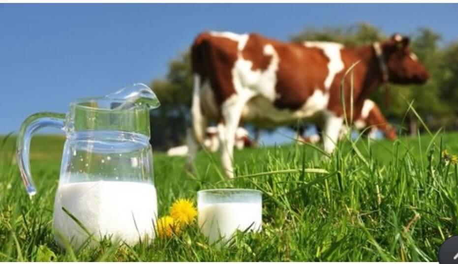 Sữa non bò có nhiều đặc điểm tương đồng với sữa mẹ nhất