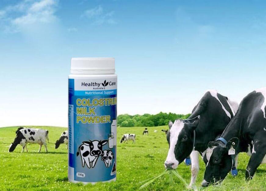 Sữa non Úc được lấy từ nguồn sữa bò an toàn và tốt nhất