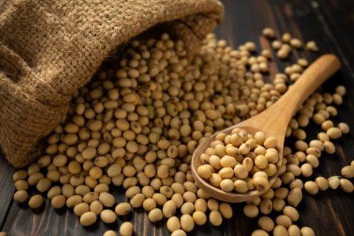 Sữa đậu nành đóng hộp thương hiệu Ichiban chứa 95% dịch trích đậu nành